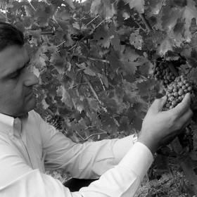 vitificazione